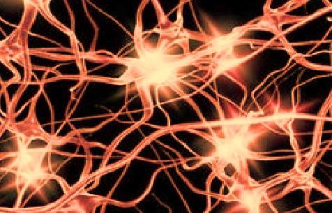 Los neurocientíficos descubren un circuito que ayuda a redirigir la atención para enfocarse en amenazas potenciales.
