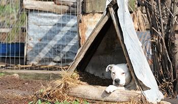 Rige prohibición para realización de carreras de perros