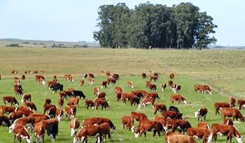 Uruguay cumplió con exigencias internacionales para garantizar estatus sanitario de exportaciones de carnes