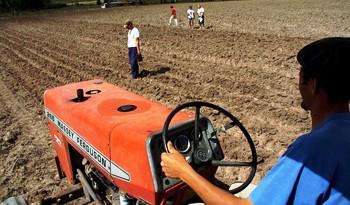 Colonización convoca a interesados en arrendar 1.416 hectáreas de producción ganadera en Florida