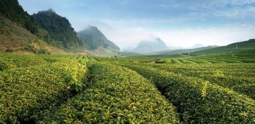 Asegurando un medio ambiente sostenible y aumentando la resiliencia al cambio climático
