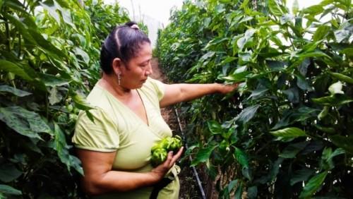 La agricultura sostenible en El Salvador ayuda a las familias  a superar desafíos del cambio climático y la COVID-19