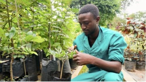 El arte del partido programa innovador conecta a donantes y grupos de plantación de árboles