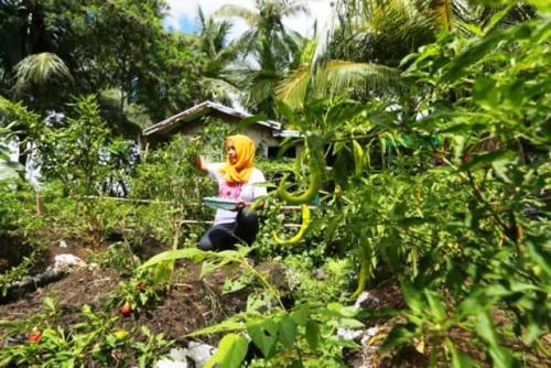 Adelantarse a las crisis para ayudar a las comunidades agrícolas de Filipinas