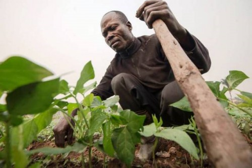 Los impactos del COVID-19 aumentan el hambre aguda en países que ya atraviesan una crisis alimentaria
