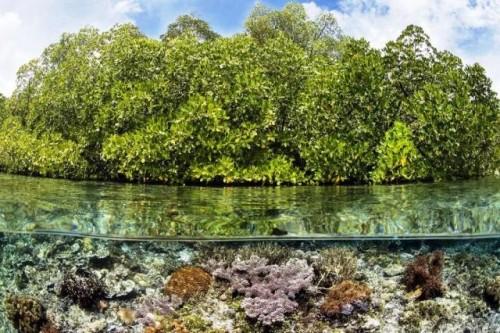 Se acaba el tiempo para los arrecifes de coral: nuevo informe