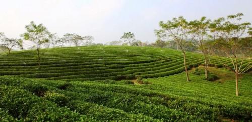 Ayudar a los pequeños agricultores a adaptarse al cambio climático o hacer frente al aumento del hambre y la migración, advierte el presidente del FIDA