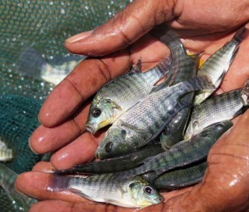 La pesca y la acuicultura mundiales gravemente afectadas por la pandemia de COVID-19, según un informe de la FAO