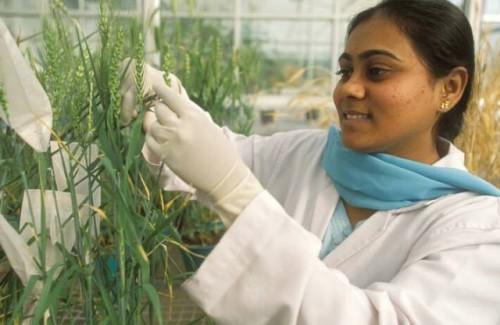 El empoderamiento de las mujeres y las niñas es esencial para garantizar la seguridad alimentaria sostenible después de la COVID-19