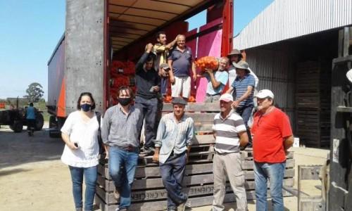 Productores hortícolas de Canelones exportarán 380 mil kilos de cebolla a Brasil