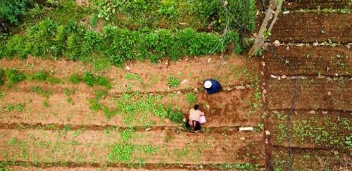 Vinculando familias, granjas y escuelas en Guatemala
