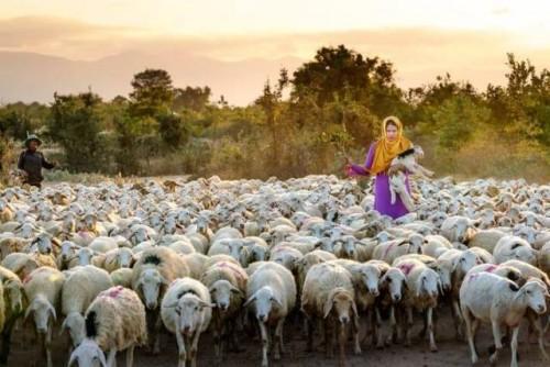 El Director General de la FAO pide en la Asamblea General de las Naciones Unidas una acción decisiva para abordar la resistencia a los antimicrobianos (RAM)