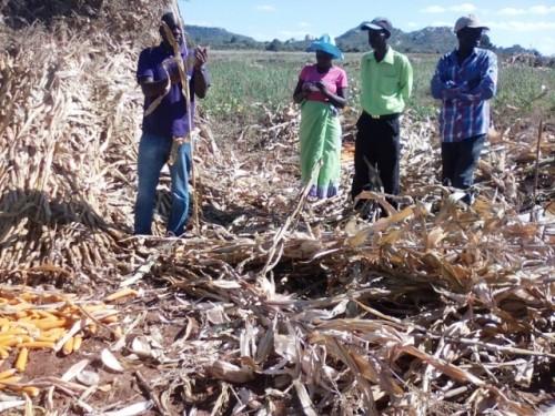 Lucha contra el hambre oculta en Zimbabwe