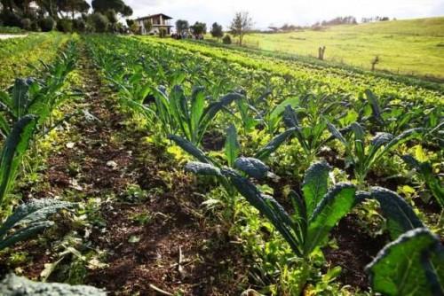 La FAO lanza herramientas prácticas para fomentar el secuestro de carbono orgánico del suelo