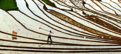 La FAO a la vanguardia de los esfuerzos mundiales para construir asociaciones entre los sistemas agroalimentarios y la conservación